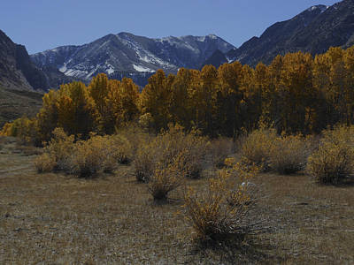 Photograph - Aspen And Snow Capped Mountain by Don Kreuter