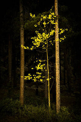 Photograph - Aspen Aria by Morris  McClung