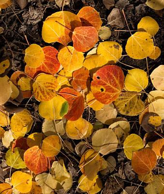 Photograph - Aspen Autumn by Kathleen Bishop