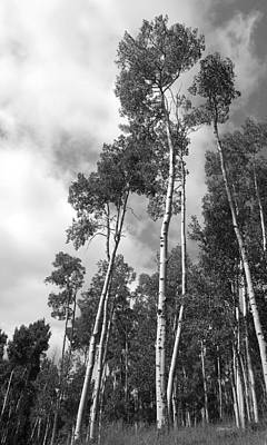 Photograph - Aspen Black And White Photograph by Ann Powell