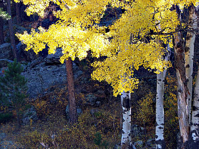 Aspen Bright Art Print by Linda Cox