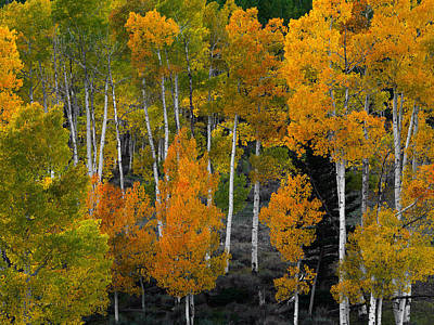Photograph - Aspen Brilliance  by Leland D Howard
