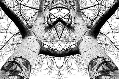 Washington Photograph - Aspen Cathedral by James K. Papp