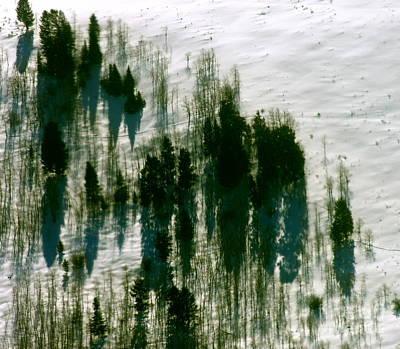Photograph - Aspen Colorado Tree Drama by Jacqueline M Lewis