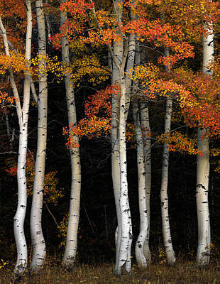 Aspen Contrast Art Print by Leland D Howard