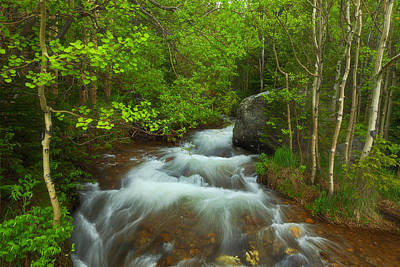 Aspen Creek Art Print by Darren  White