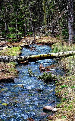 Vale Digital Art - Aspen Crossing Mountain Stream by Barbara Chichester