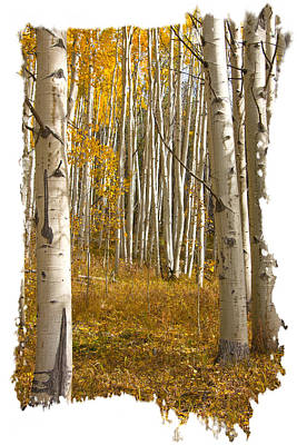 Photograph - Aspen Dreamland by Judy Deist