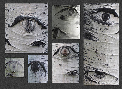 Photograph - Aspen Eyes Are Watching You by Conni Schaftenaar