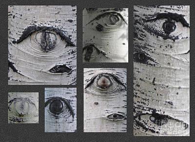 Aspen Eyes Are Watching You Art Print