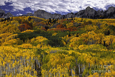 Photograph - Aspen Fantasy by Stuart Gordon