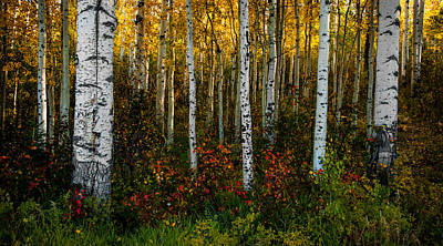 Photograph - Aspen Floor by Ken Smith