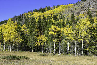 Photograph - Aspen Foliage by Tom Wilbert