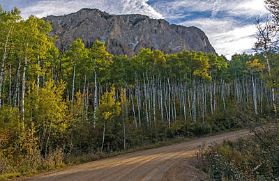 Photograph - Aspen Forest Along A Colorado Unpaved Road by Willie Harper