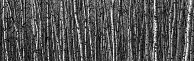 Peaceful Scene Photograph - Aspen Forest by Paul Freidlund