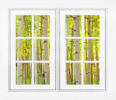 Bo Insogna Photograph - Aspen Forest White Picture Window Frame View by James BO  Insogna