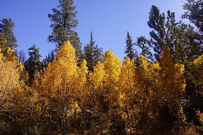 Photograph - Aspen Glory by Michael Courtney