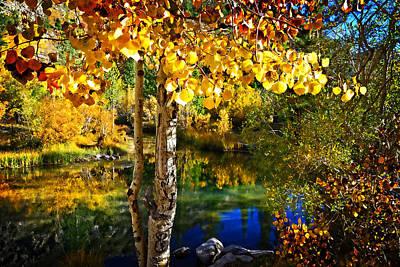 Photograph - Aspen Glow  by Lynn Bauer