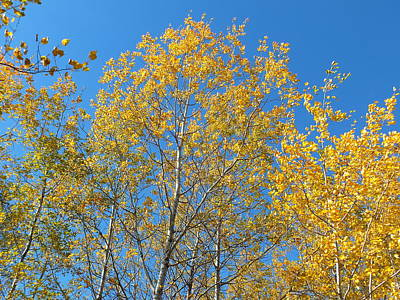 Photograph - Aspen Gold by Gene Cyr