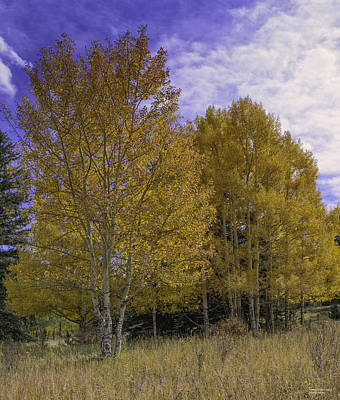 Photograph - Aspen Goldrush by Tom Wilbert