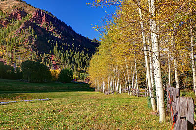 Photograph - Aspen Grove 4 by Allen Beatty