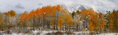 Photograph - Aspen Grove Along The Snake River Grand Teton National Park by Ed  Riche
