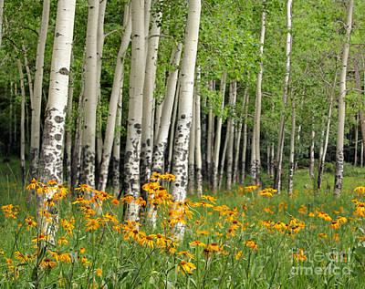 Aspen Grove And Wildflower Meadow Art Print by Matt Tilghman