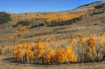 Photograph - Aspen Grove Grand Staircase Escalate by Stephen Campbell