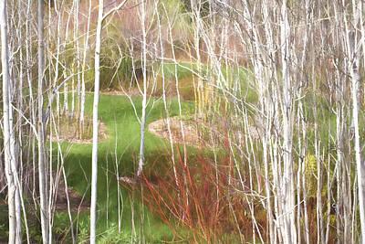 Aspen Grove - Green Grass Art Print