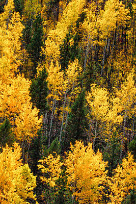 Aspen Grove Art Print by Juli Ellen
