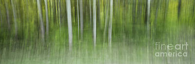 Baum Wall Art - Photograph - Aspen Grove  by Priska Wettstein