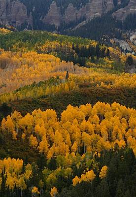 Aspen Groves At Silver Jack Reservoir Print by Jetson Nguyen