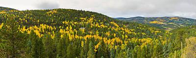 Aspen Hillside In Autumn, Sangre De Art Print