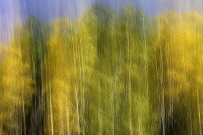 Photograph - Aspen Impression by Jeanne Hoadley