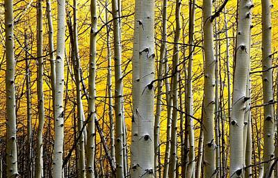 Photograph - Aspen In Full Display At Kebler Pass by Jetson Nguyen