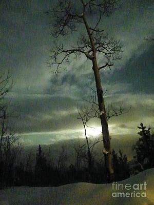 Aspen In Moonlight Art Print