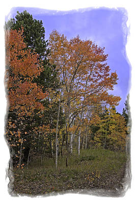 Photograph - Aspen In The  Field by Judy Deist