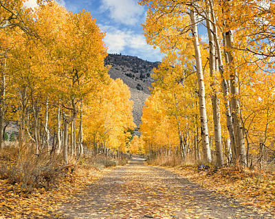 Trees Photograph - Aspen Lane by Priya Ghose