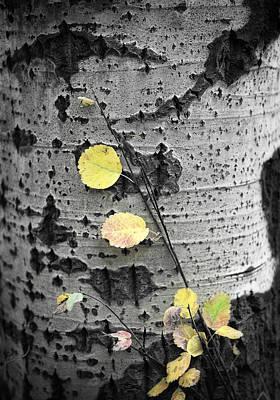 Aspen Leaf Photograph - Aspen Leaf Gold Punch by Carol Craven