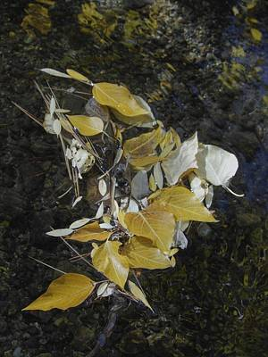 Photograph - Aspen Leaves In Glass Creek Whirlpool by Don Kreuter