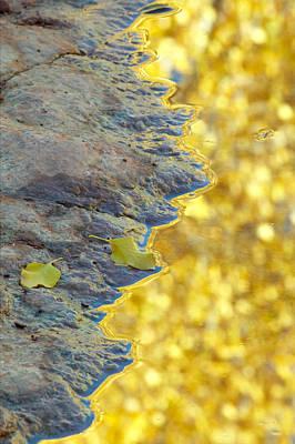 Photograph - Aspen Leaves Reflection by Byron Jorjorian