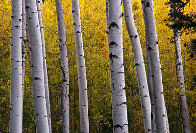 Flagstaff Wall Art - Photograph - Aspen Light 2 by Dave Dilli