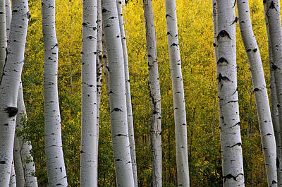 Flagstaff Wall Art - Photograph - Aspen Light 3 by Dave Dilli