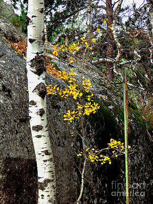 Photograph - Aspen by Linda Cox