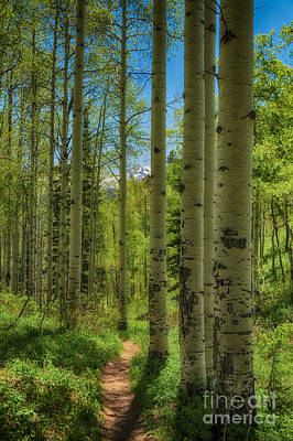 Aspen Lined Hiking Trail Hdr Art Print by Mitch Johanson