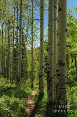 Aspen Lined Hiking Trail Art Print by Mitch Johanson