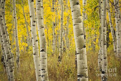 Photograph - Aspen Love by Idaho Scenic Images Linda Lantzy