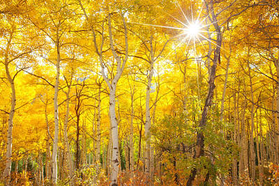 Autumn Landscape Photograph - Aspen Morning by Darren  White