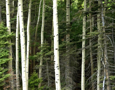 Photograph - Aspen - Nature Art by Ann Powell