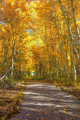Photograph - Aspen Pathway To Silver Lake by Priya Ghose